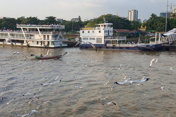 Yangon River With Seagulls