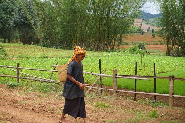 Burmese Peasant Seen On The Trekking Tour From Pindaya, Mandalay