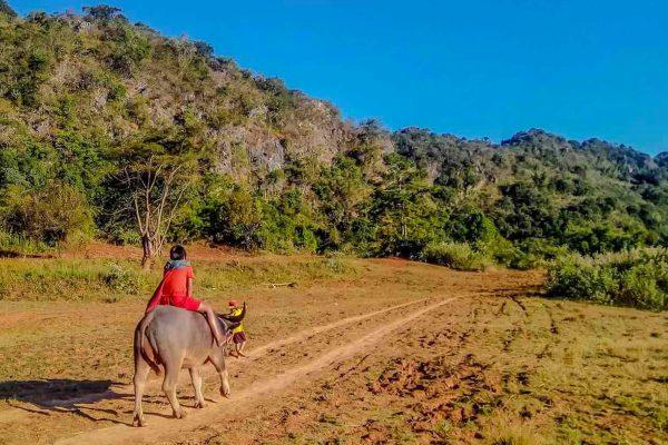 Burmese Girls Rides A Water Buffalo