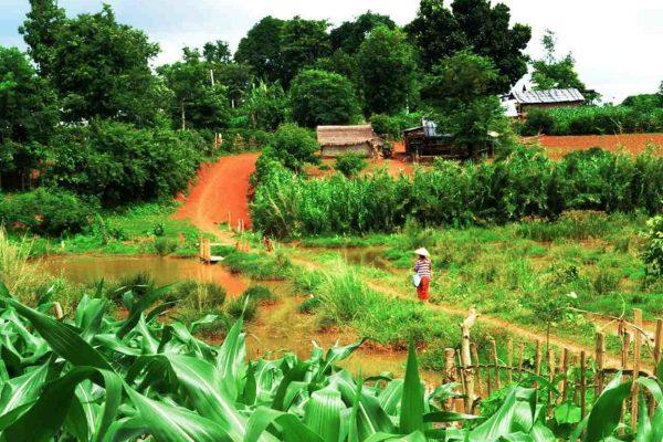 Small Village Near Hsipaw