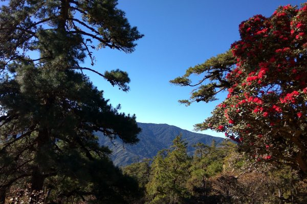 Mountainous View With Red Flowers