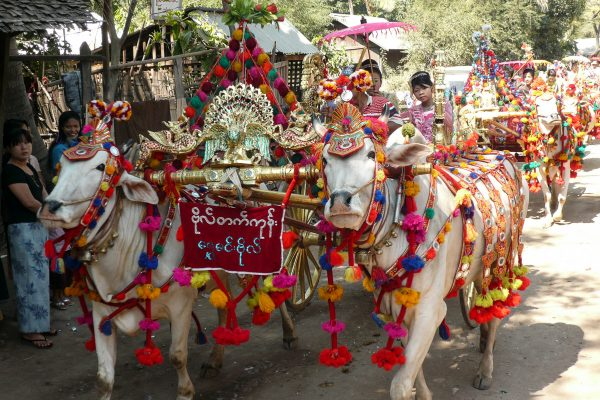 Festively Decorated Ox-Cart