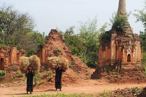 Pa-O Women Are Carrying Straw, Myanmar